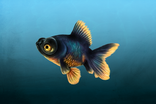 Fish :D