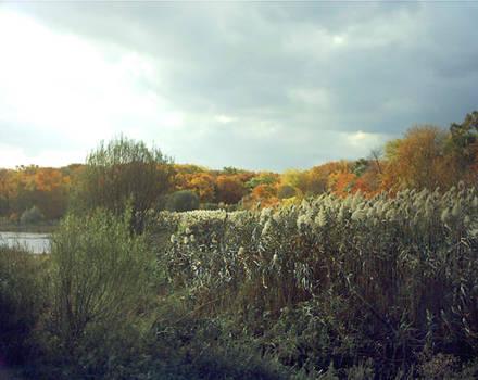 Autumn Ala Wiffy Grass