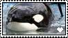 Love Tilly Forever Stamp by Sebille-Forsythia