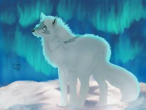 Dagny the arctic fox