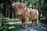 Little yak...