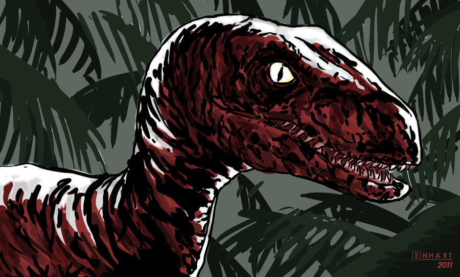 Raptor by kevinenhart