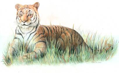 Tiger by Raironu