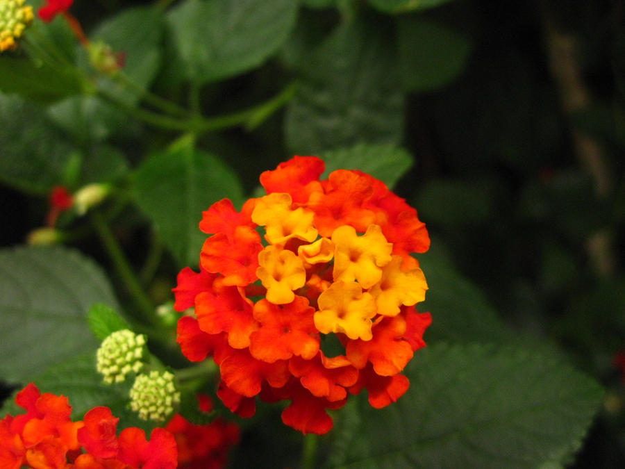 Little orange and red and yellow flowers by beththewriter on deviantart little orange and red and yellow flowers by beththewriter mightylinksfo