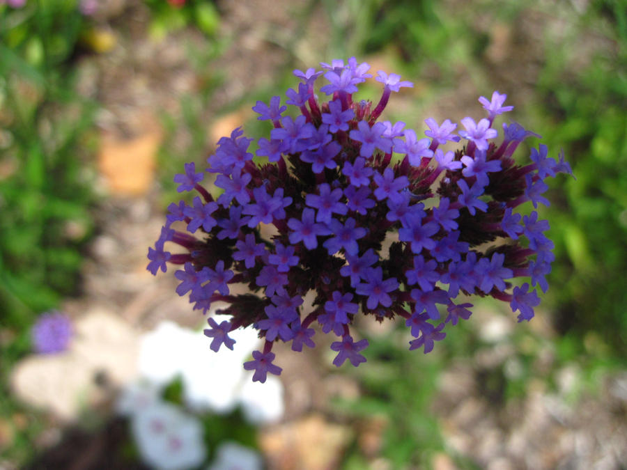 little purple flowers by beththewriter on deviantart, Beautiful flower