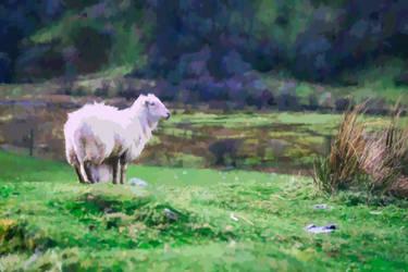 Sheeple by malkavian30504
