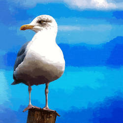 Seagull by malkavian30504