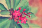Flowers by SnowPinappleYeah