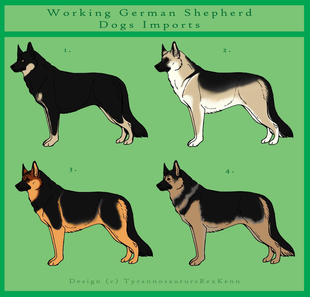 German Shepherd Dog Imports - Closed by TyrannosaurusRexKenn