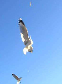 Arial Acrobatics