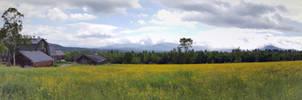 Buttercup Panorama