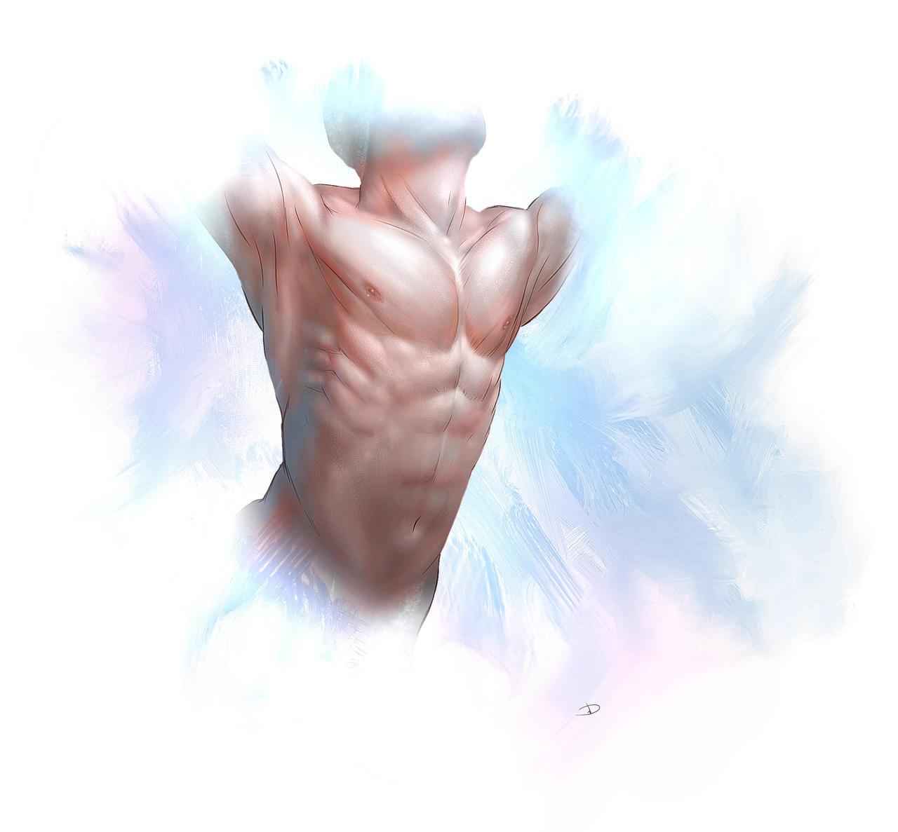 Study male torso by PeppeTi