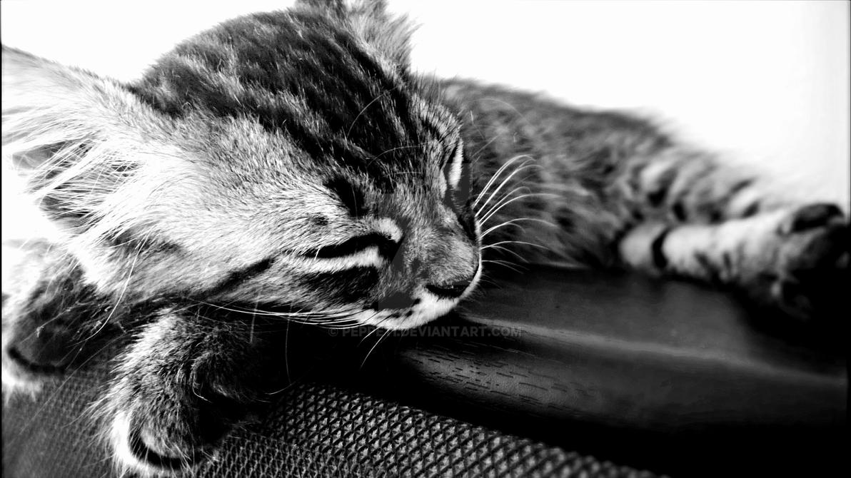 Sleeping Cat by PeppeTi