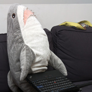 Code-Shark's Profile Picture