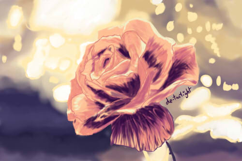 Rose by de-twilight