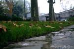Water Blobs of Grass