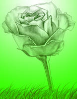 Green Rose by crazytux