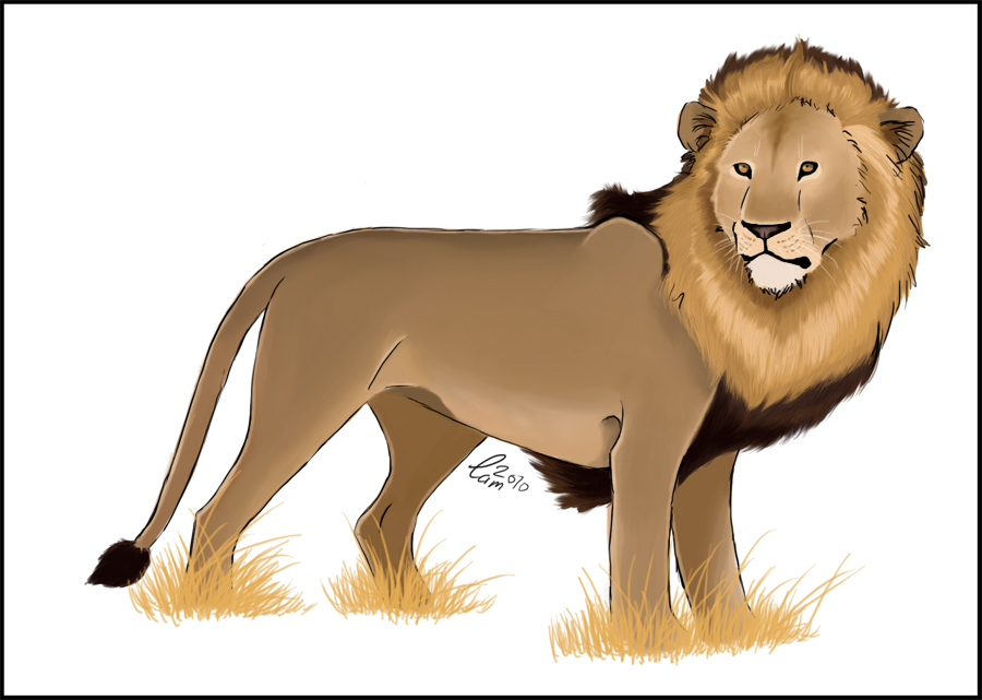 Male lion colored by CamStatic on DeviantArt