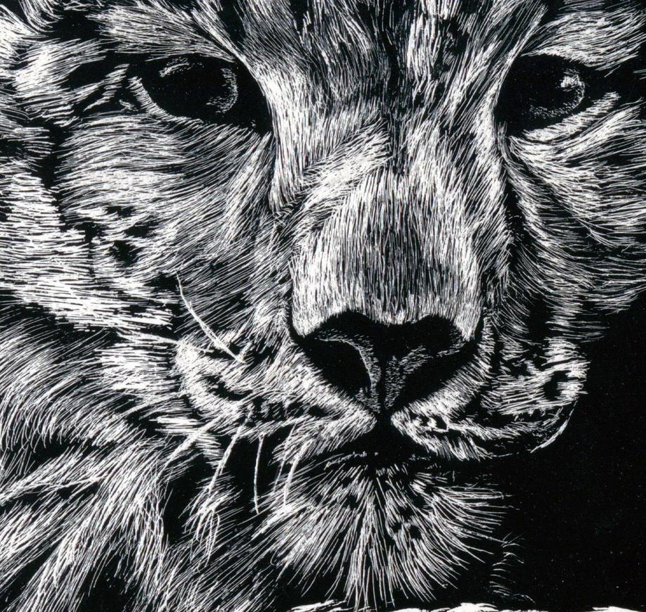 close up scratch art tiger by JustinDonnelson on DeviantArt