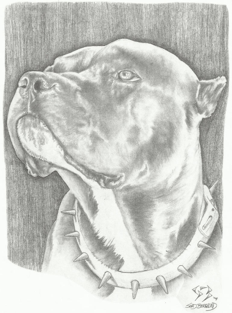 Pitbull dog drawings in pencil - photo#25