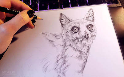 Meowl - wip