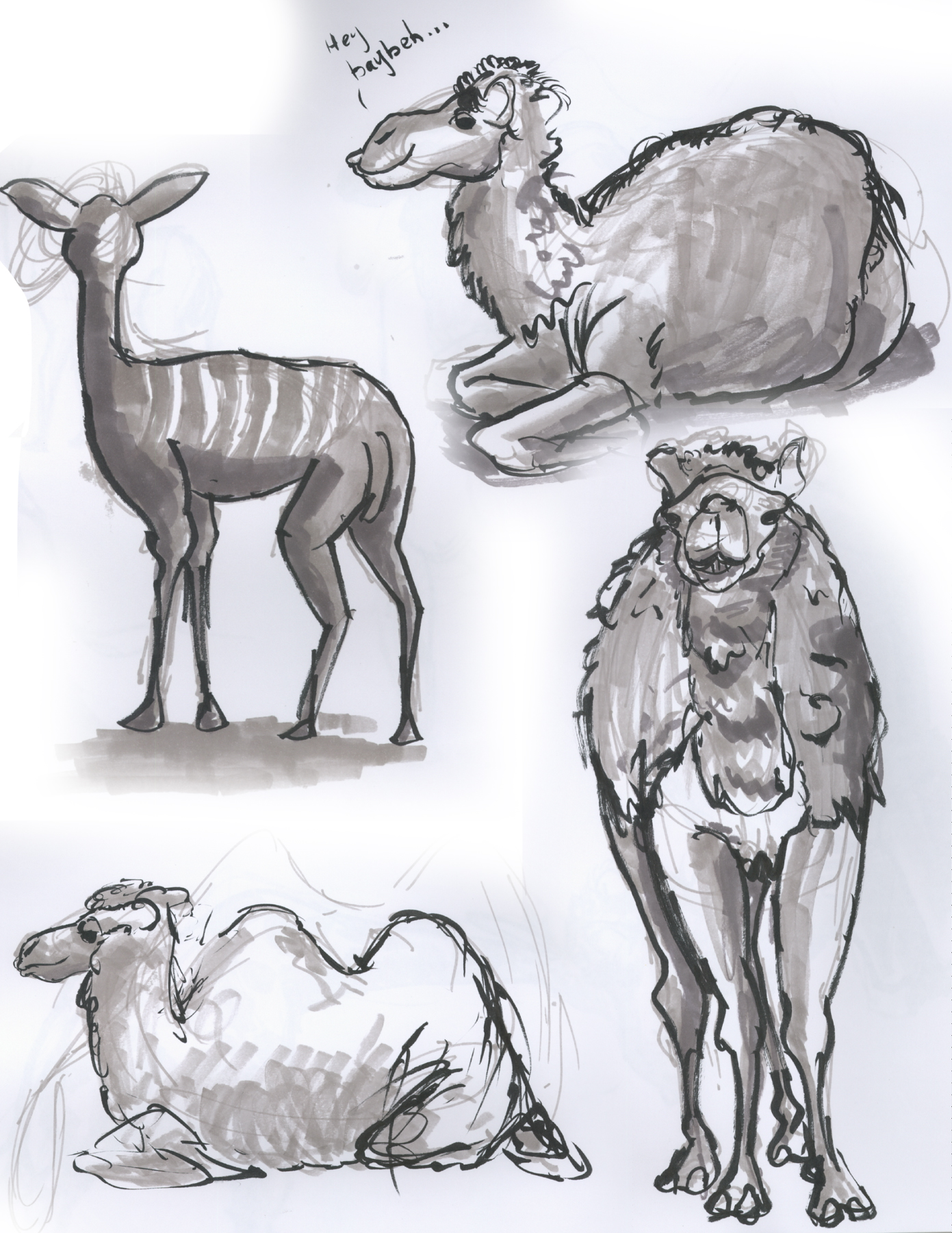CAMELS and a Kudu Animal Anatomy Sketch Dump 9 by TheOAFWorks on ...
