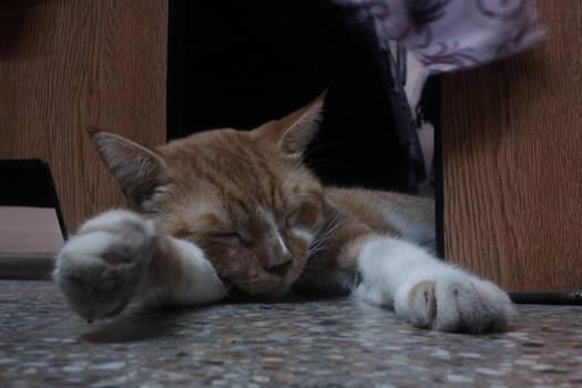I is Sleepy...