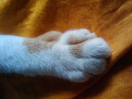 The puurrrrfect PAW