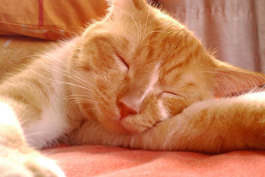 aaaah SLEEP... by XaraaKay