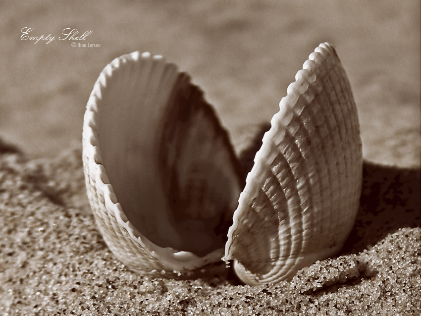 Empty Shell by ninazdesign