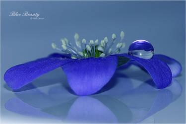 Blue Beauty by ninazdesign