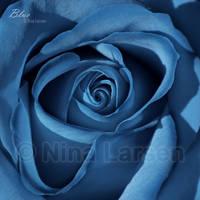 Blue by ninazdesign