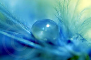 Blue. by ninazdesign