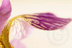 Purple Bokeh I by ninazdesign