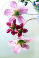 Happy Flower by ninazdesign