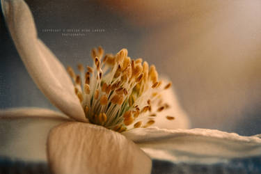 .:reaching for the light:. by ninazdesign