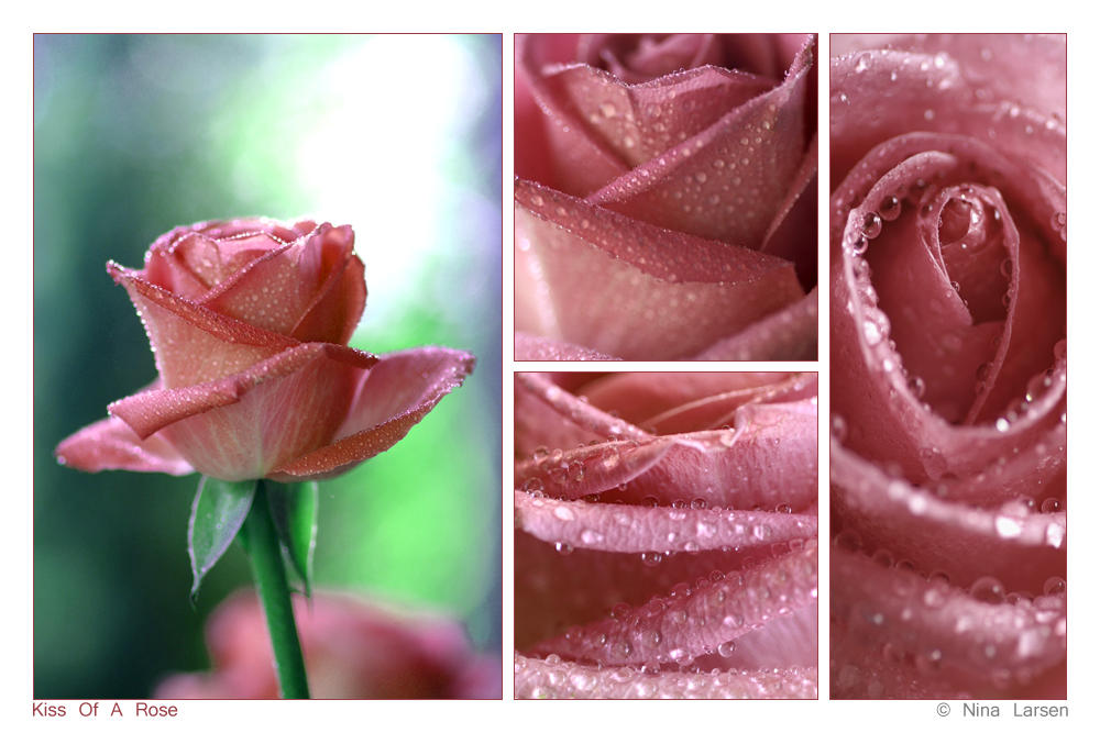 Kiss Of A Rose by ninazdesign