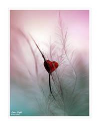 Love Light by ninazdesign
