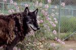 Shaunie by flowers by Nieme
