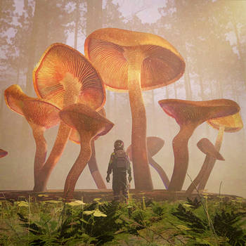 Day 10 - Fungus Forest