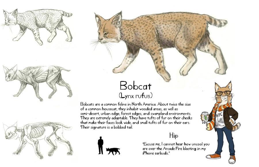 Bobcat Animal Diagram - Data Wiring Diagrams •