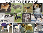 DARE TO BE RARE part 3