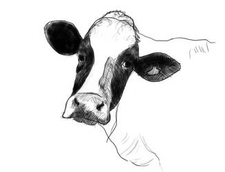 Cow by juliano7s
