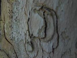 Tree bark 3 by LeetZero