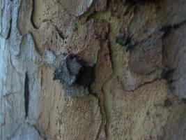Tree bark 4 by LeetZero