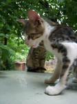 Cat 67
