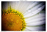 Wet Yellow and White