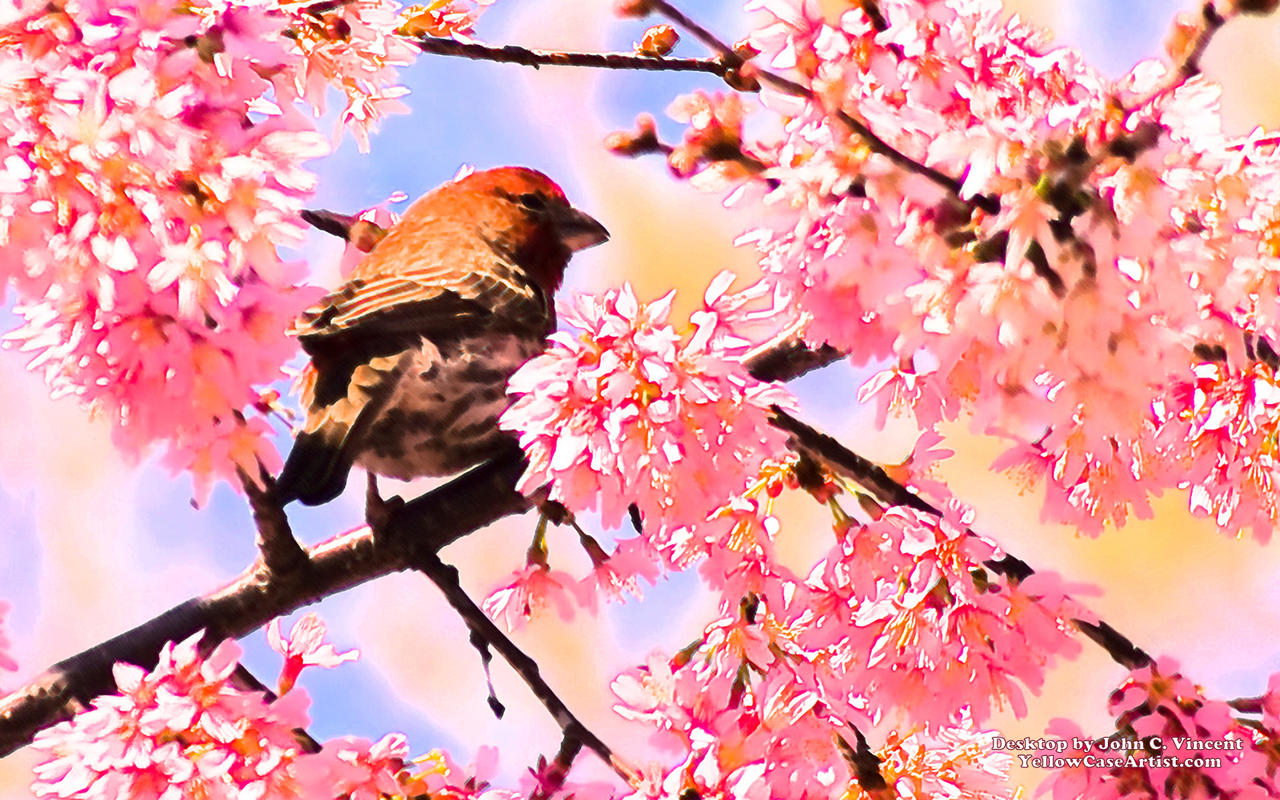 spring bird in pink desktop by yellowcaseartist on deviantart