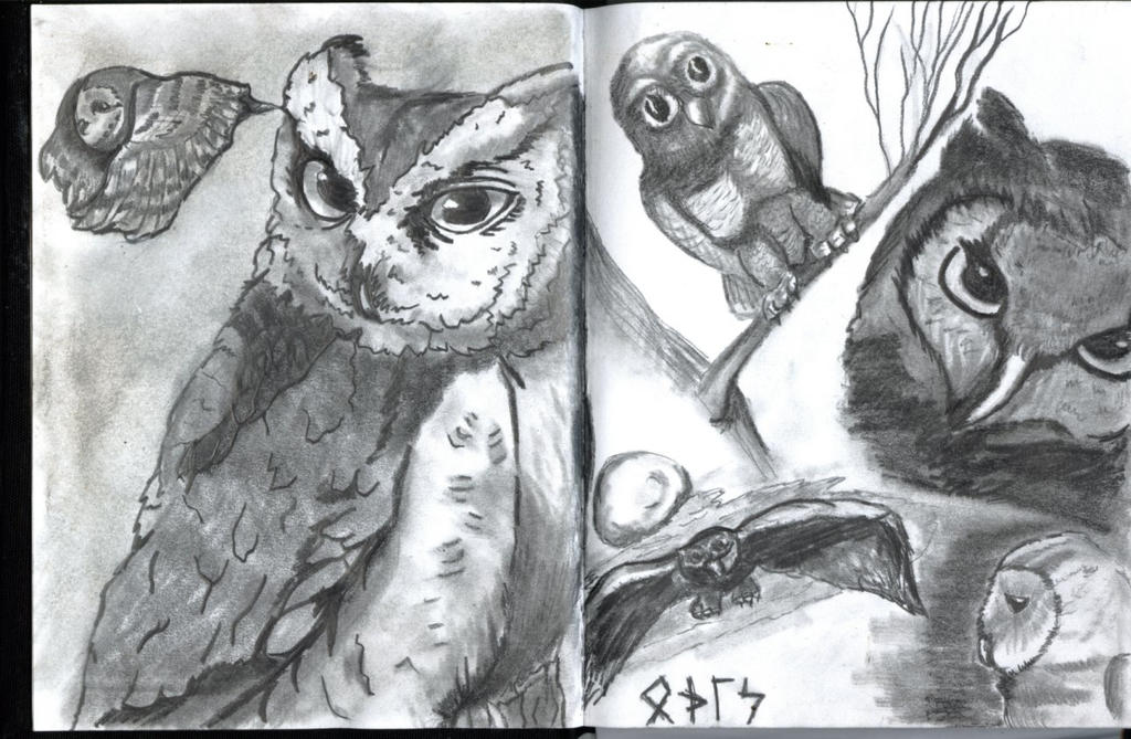Owls from sketchbook by GentlestGiant