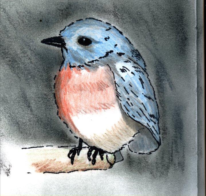 Cat's Bluebird by GentlestGiant